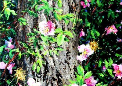 © Cindy Barratt Summer Alberta Roses Acrylic