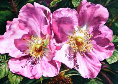 © Cindy Barratt Sunny Alberta Roses 14 Watercolour