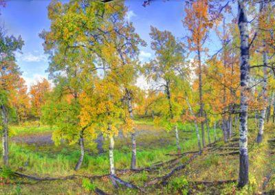 © Gordon Hiebert Autumn In The Parklands