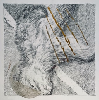 "© Colleen Campbell Entanglement I, 2019, 15 1/2"" x 15 1/2"" Graphite and Watercolour"